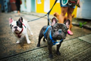 Advance Healthcare Directive for Pets
